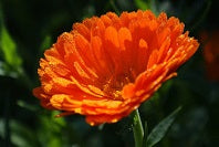 From Lifeless Skin to Youthful Vitality with One Ingredient