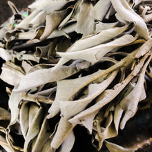 White Sage loose herb 1oz