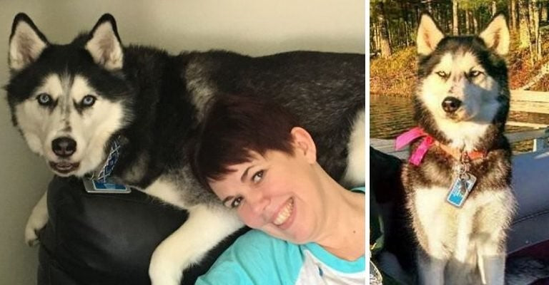 Owner's Dog Smells Her Cancer Three Times After The Hospital Disregarded Her Pain copy