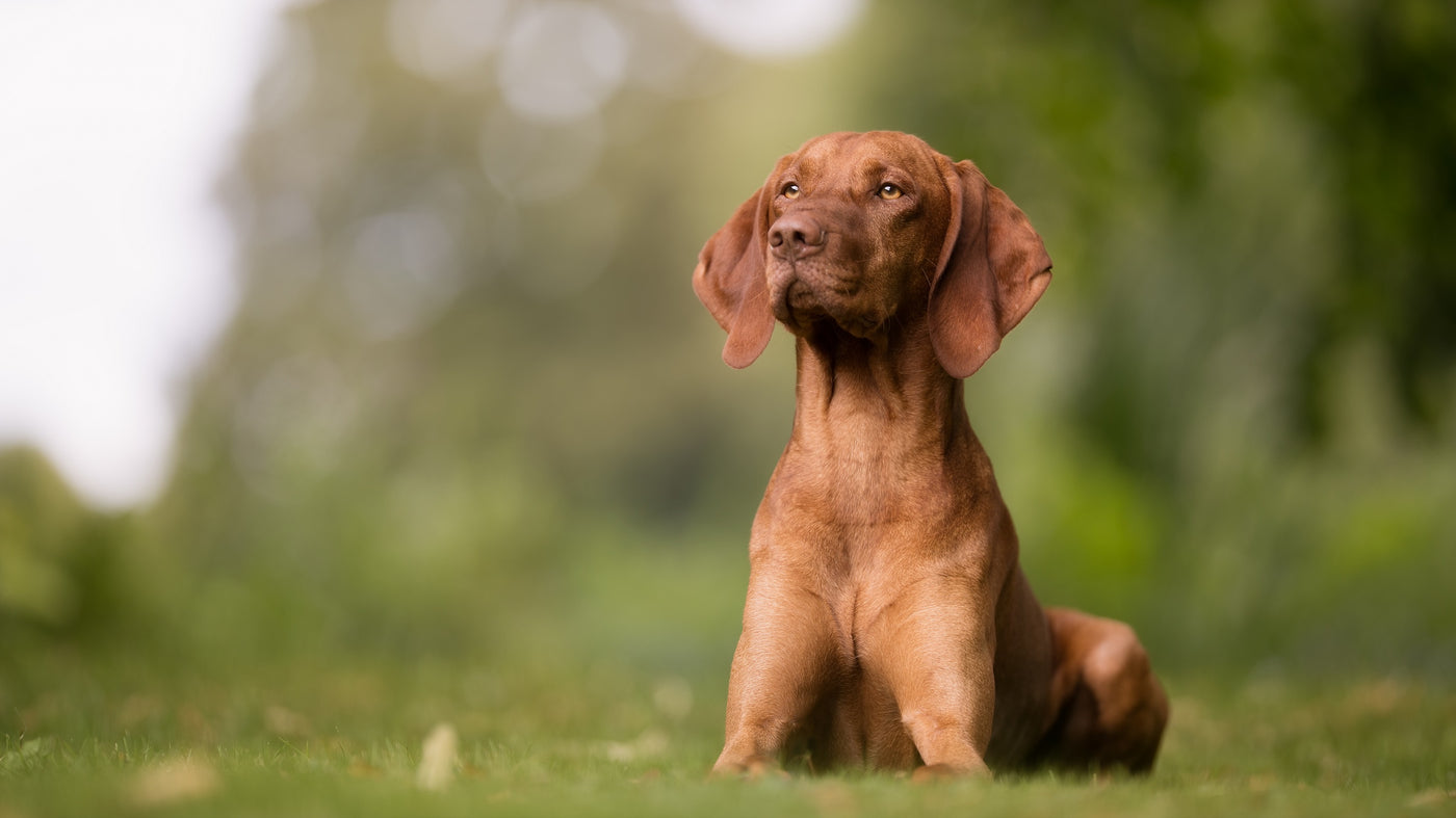 Turmeric for dogs: is it a good idea? - Lintbells