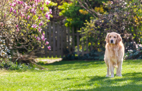 Does my dog need Glucosamine?