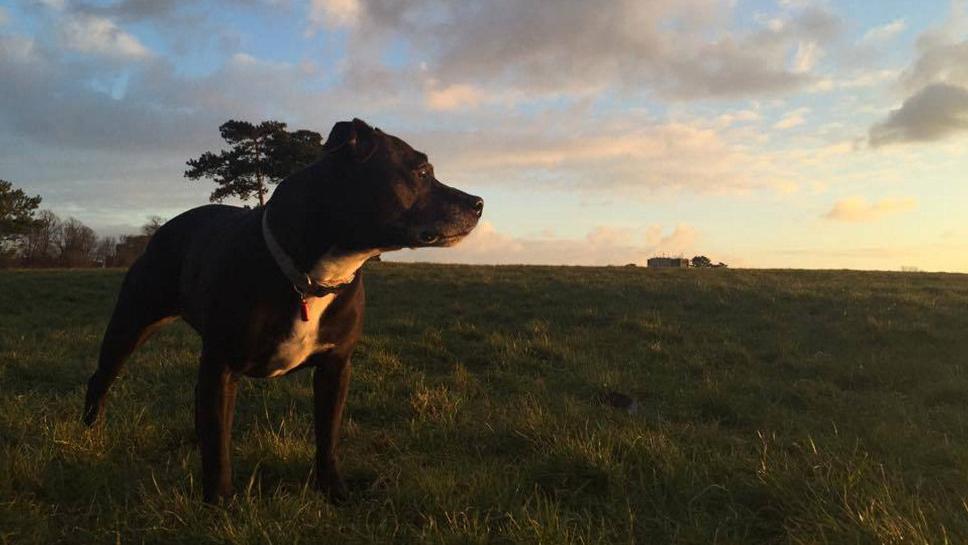 top tips: how to help your dog lose weight | lintbells uk blog