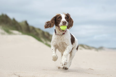 Top dog beaches for you and your pooches
