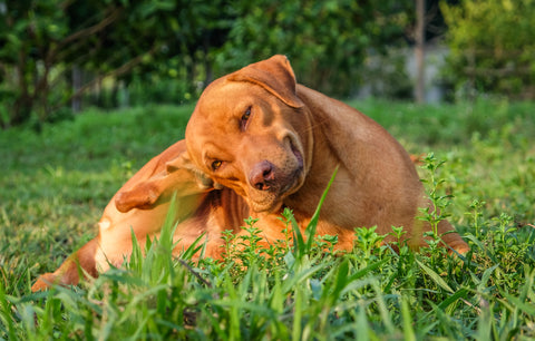 5 Common dog skin concerns and how you can help