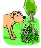 Cartoon dog with hay fever looking at flowers.