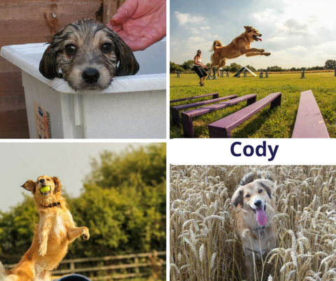 Pet of the month Cody