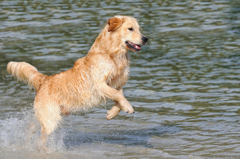Dog takes dip in open water to cool down on a hot day