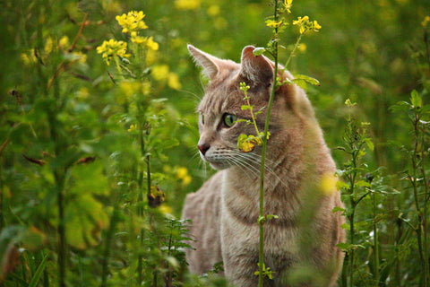 Cat in field with flowers