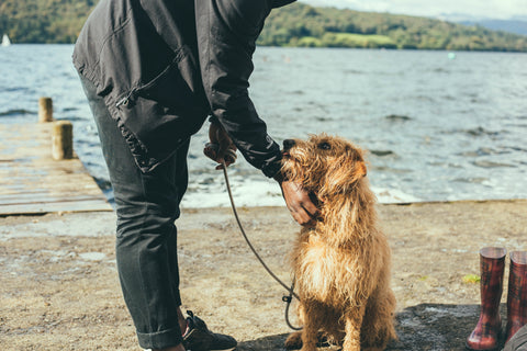 Wet dog by lake stroked by owner