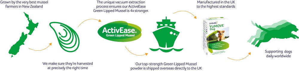 Green lipped mussel journey infographic