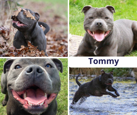 Pet of the month Tommy