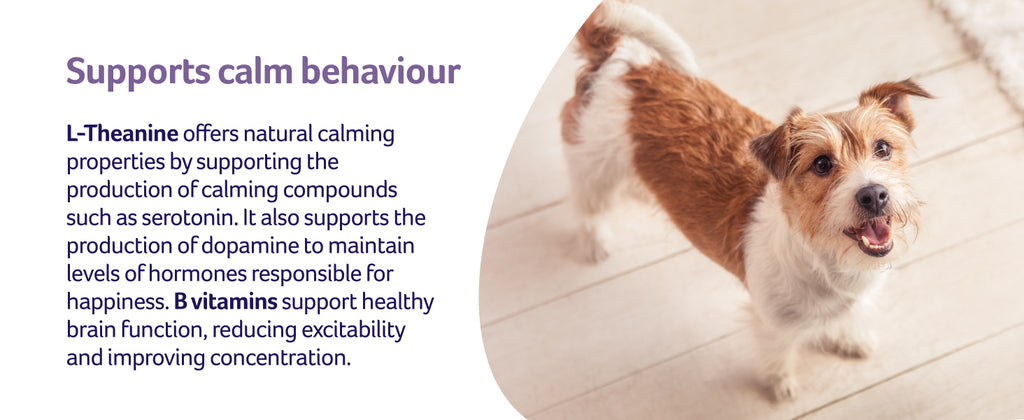 L-Theanine supports calm behaviour with image of dog