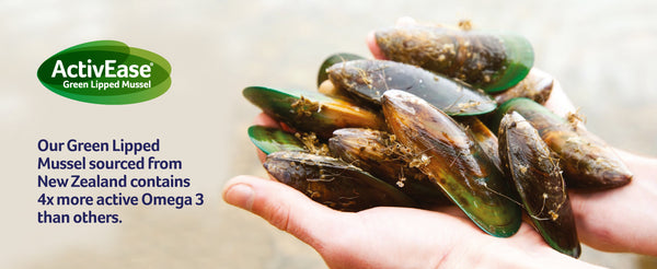 Green lipped mussel in hands