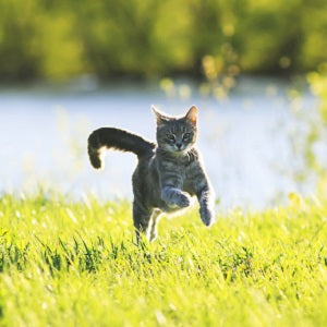 Cat jumping in field