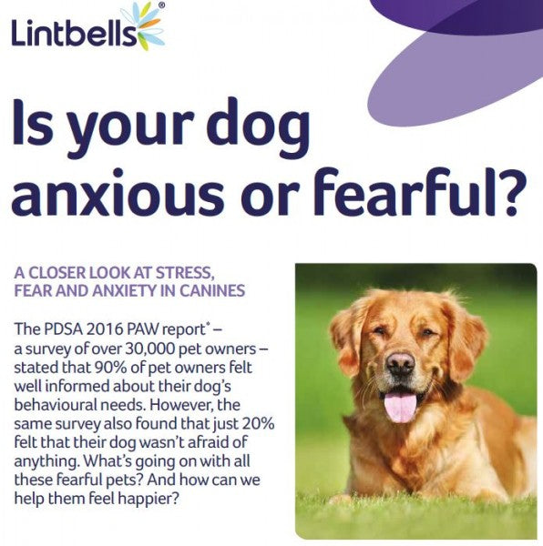 Is your dog anxious or fearful