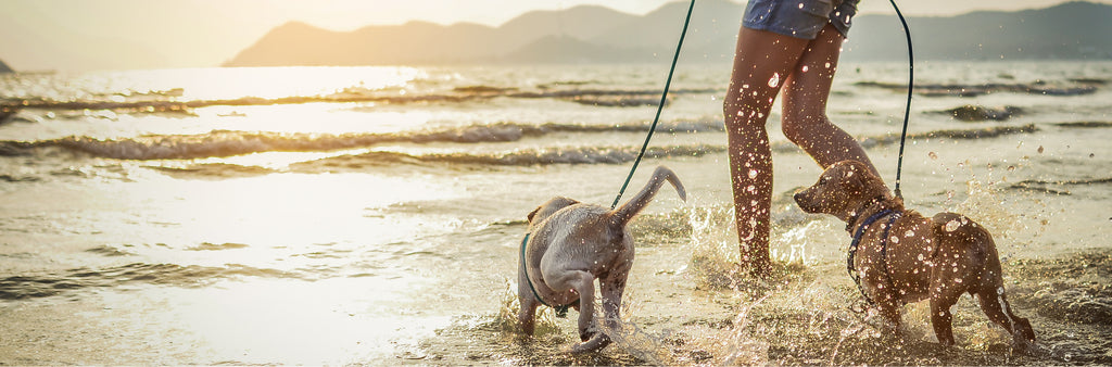dogs enjoy playing on beach with owner