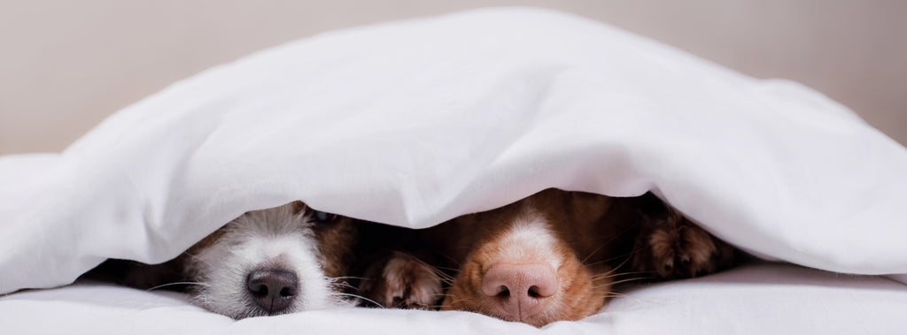 Dog's instead a duvet