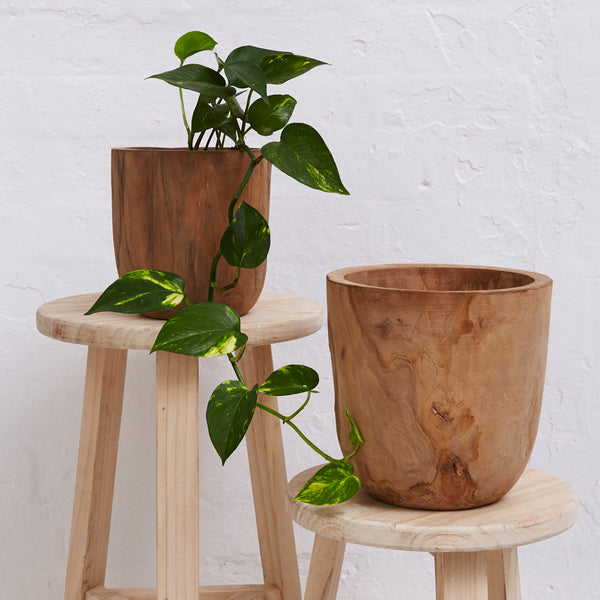 Iniko Tree Root Planters