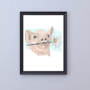 'daisy' the first piggy from the petal pigs is offering you her favourite flower. colour