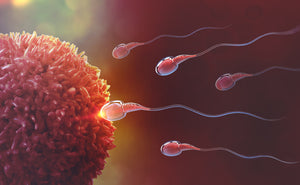 Our top 5 tips to improve male fertility