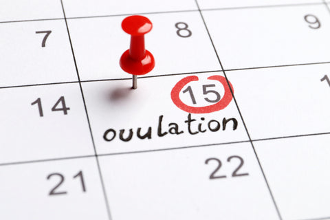 using a calender to predict ovulation