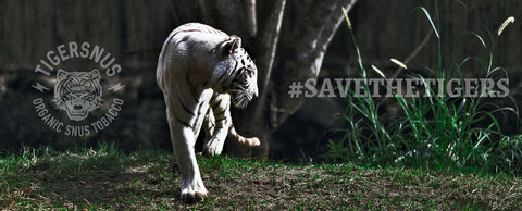 save the tigers foundation tiger snus