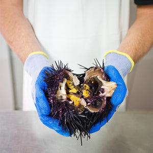All About Sea Urchins