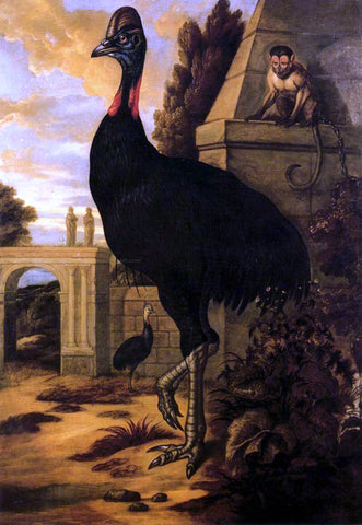 Francis Barlow A Cassowary - Hand Painted Oil Painting