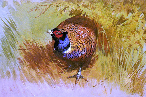 Archibald Thorburn A Cock Pheasant - Hand Painted Oil Painting