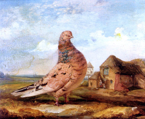 James Ward A Fancy Pigeon - Hand Painted Oil Painting