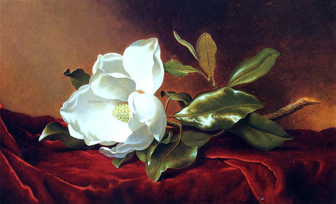 Martin Johnson Heade A Magnolia on Red Velvet - Hand Painted Oil Painting