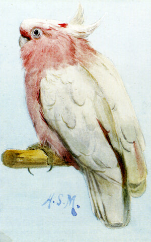 Henry Stacy Marks A Pair Of Leadbetter Cockatoos - Hand Painted Oil Painting