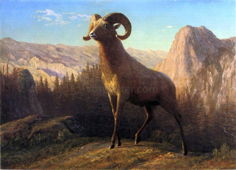 Albert Bierstadt A Rocky Mountain Sheep, Ovis, Montana - Hand Painted Oil Painting