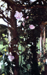 John Singer Sargent A Rose Trellis (also known as Roses at Oxfordshire) - Hand Painted Oil Painting