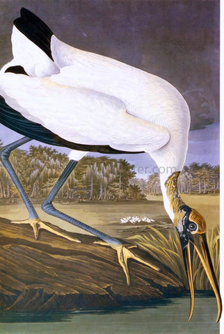 John James Audubon American Stork - Hand Painted Oil Painting