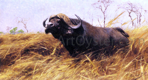 Wilhelm Kuhnert An African Buffalo - Hand Painted Oil Painting