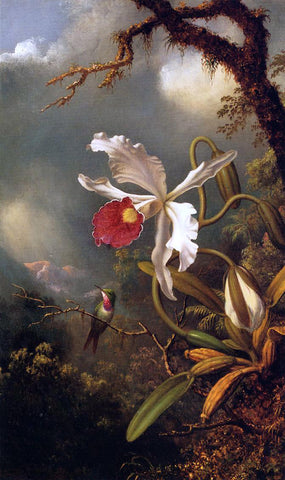 Martin Johnson Heade An Amethyst Hummingbird with a White Orchid - Hand Painted Oil Painting