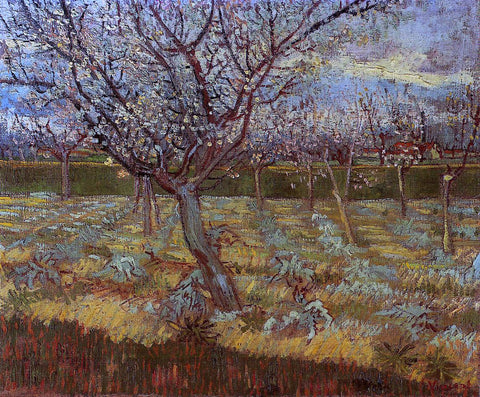 Vincent Van Gogh Apricot Tree in Bloom - Hand Painted Oil Painting