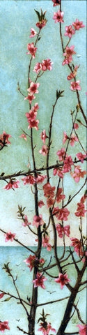 Charles Caryl Coleman Blossoming Pink Branches - Hand Painted Oil Painting