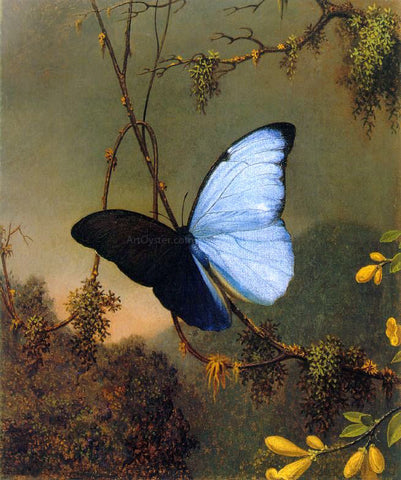 Martin Johnson Heade Blue Morpho Butterfly - Hand Painted Oil Painting