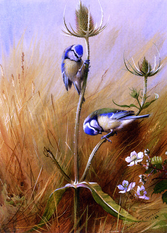 Archibald Thorburn Bluetits On A Teasel - Hand Painted Oil Painting
