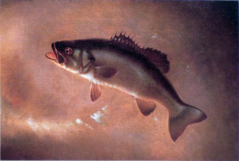 Gurdon Trumbull Broadtail Bass - Hand Painted Oil Painting