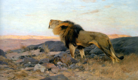 Wilhelm Kuhnert Brullender Lowe In Steiniger Steppe - Hand Painted Oil Painting