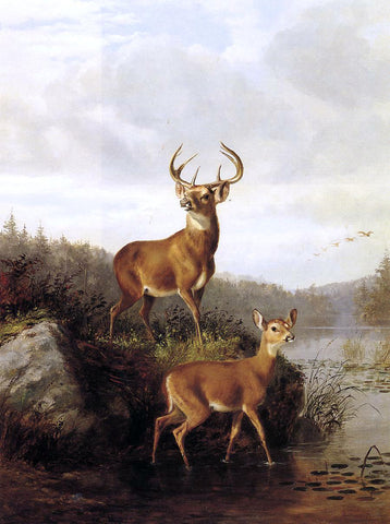 Arthur Fitzwilliam Tait Buck and Doe - Hand Painted Oil Painting