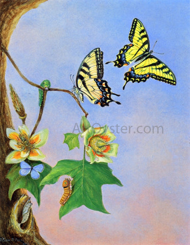 II Titian Ramsey Peale Butterflies (also known as Papilio Turnus) - Hand Painted Oil Painting