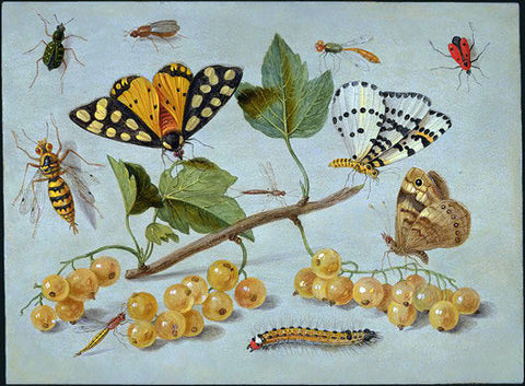 Jan Van I Kessel Butterflies and Insects - Hand Painted Oil Painting