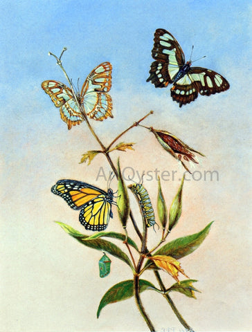 II Titian Ramsey Peale Butterflies - Hand Painted Oil Painting