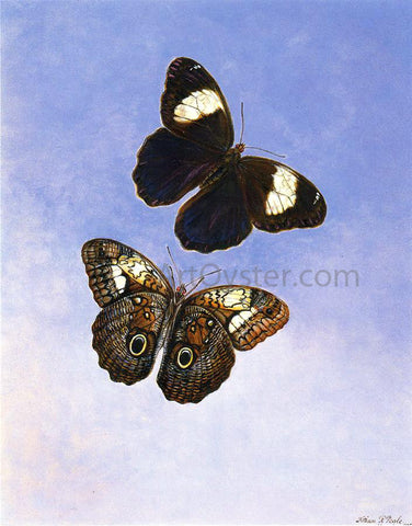 II Titian Ramsey Peale Caligo Martia (Butterflies) - Hand Painted Oil Painting