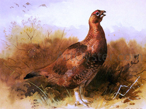 Archibald Thorburn Cock Grouse - Hand Painted Oil Painting