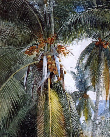 Winslow Homer Coconut Palms, Key West - Hand Painted Oil Painting